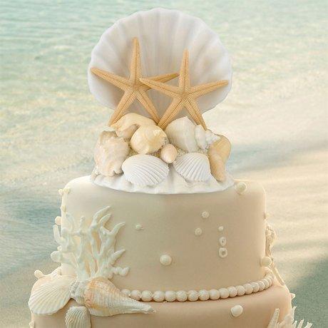 Seashell Cake Top